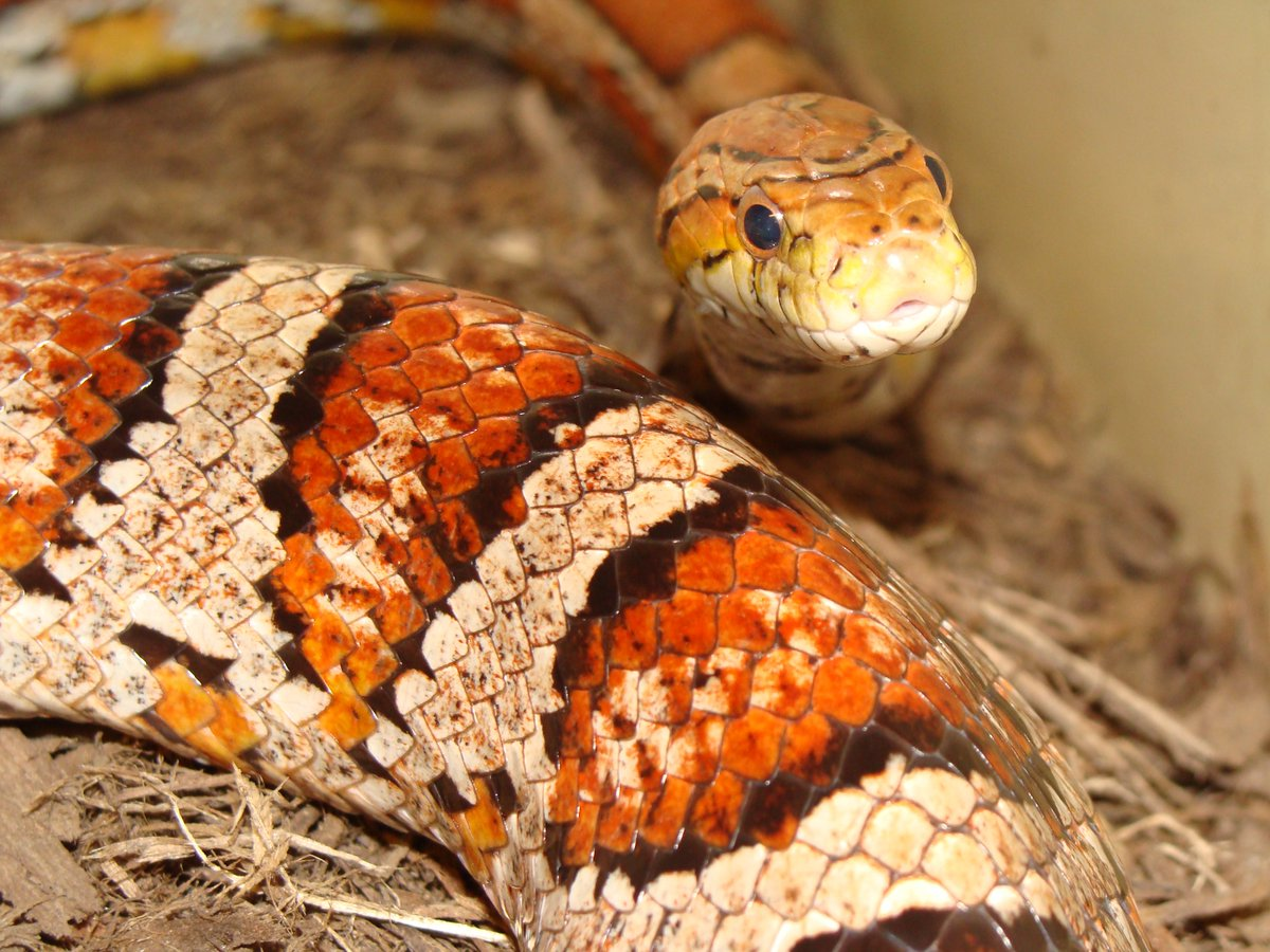 It&#39;s #WorldSnakeDay! Come to @Maymont Nature Center to see our scaly, slithering friends!  https:// maymont.org/animals/nature -center/ &nbsp; …  #RVA #reptiles #snakes<br>http://pic.twitter.com/5dRJqwSXjt