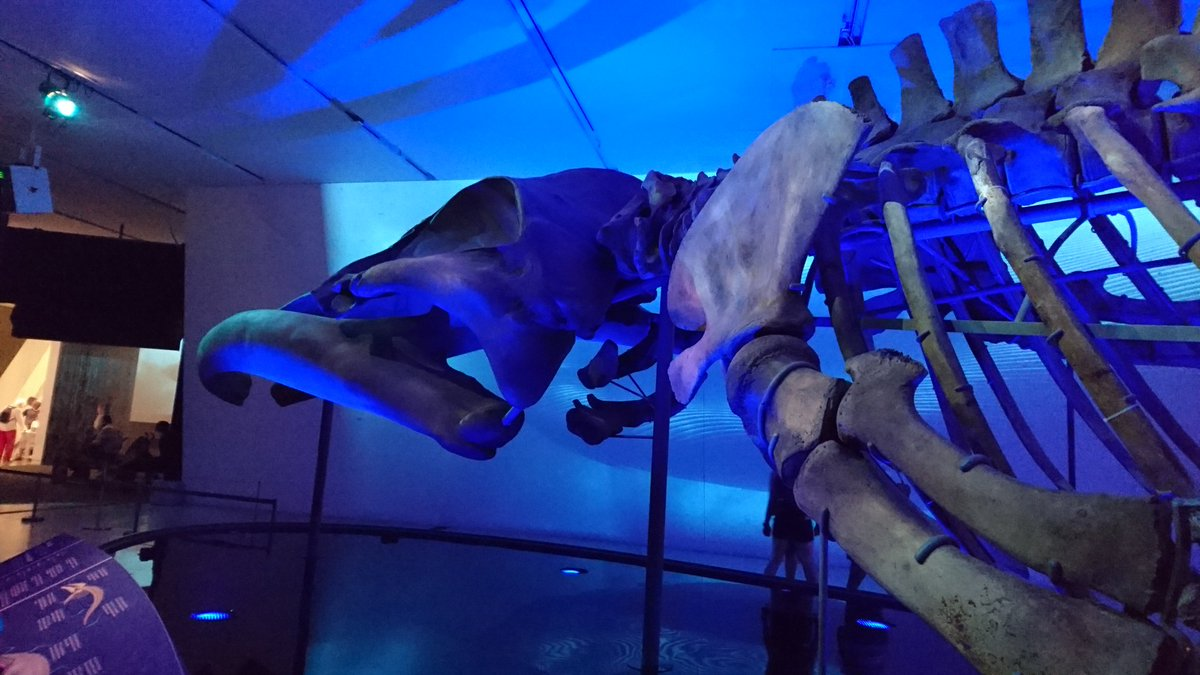 The #rombluewhale is magnificent in person. <br>http://pic.twitter.com/CoRP8J8Mru
