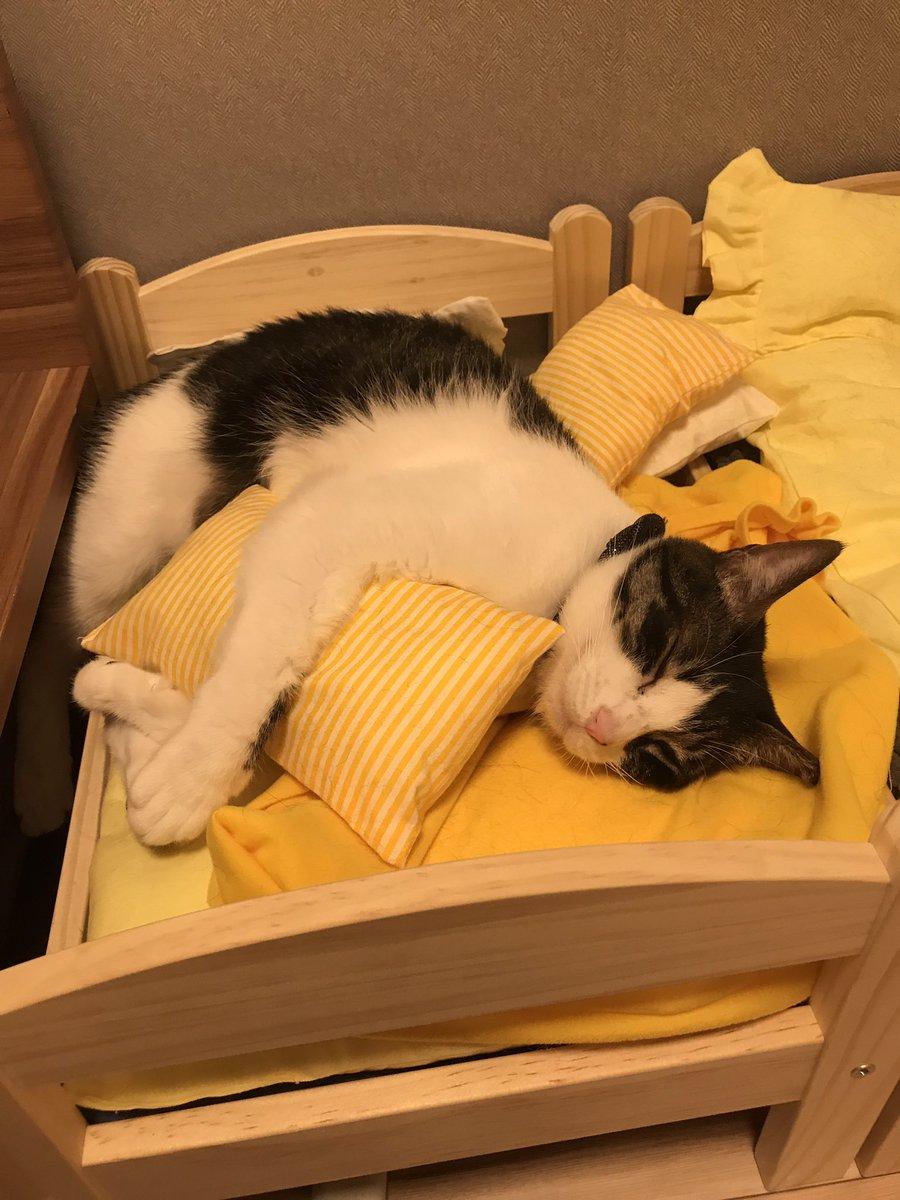 IKEAのベッドめっちゃよく使うから「まぁさすがにまさか枕は使わんだろ」とダメもとで枕も作ってあげたら枕もセットでめっちゃ使うrikkusora.com/rikku/ikeabedm… pic.twitter.com/rpYEmJXwNB