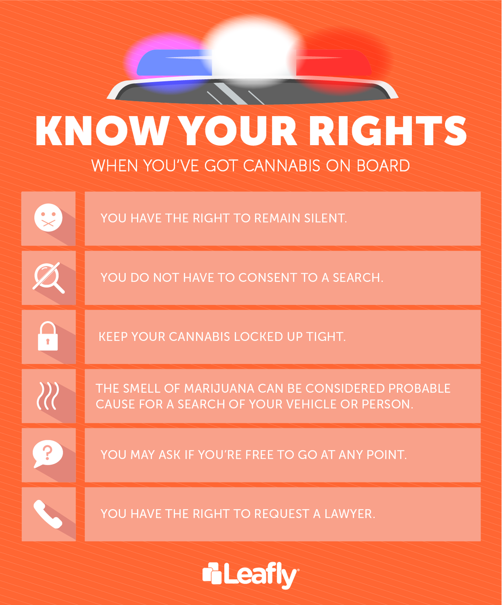 Infographic: Know Your Rights When Driving With Cannabis