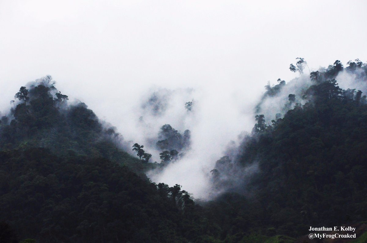 I&#39;m heading back to this #forest in the clouds tomorrow! Excited to meet up w/my #HARCC #frog rescue team! @HondurasARCC #MondayMotivation<br>http://pic.twitter.com/VmuR62RABs