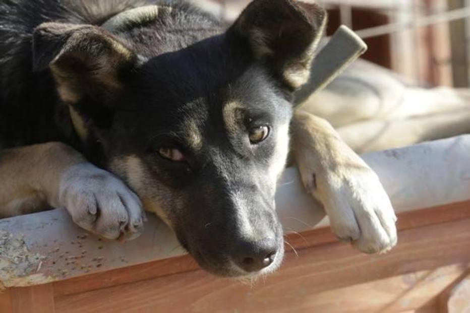 Apoia? Projeto quer liberar animais em hospitais de SP para visitar pacientes https://t.co/PwM80T0A1d