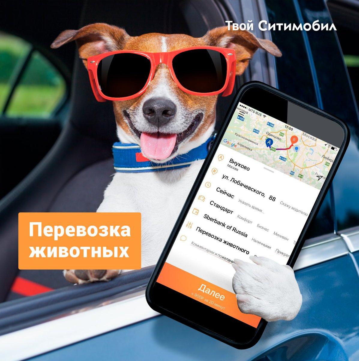 перевозка животных в поезде по россии в 2019 году