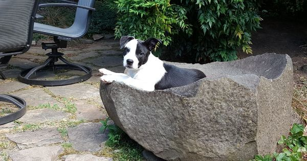 http:// bit.ly/2tysC6m  &nbsp;   Josie I&#39;m pretty sure that&#39;s not what the birdbath is for. #dogpictures #dogs #aww #cuteanimals #dogsoftwitter #do… <br>http://pic.twitter.com/mh12Pq4ACD