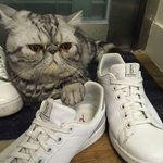 Keep your paws off my ED by Ellen shoes.
