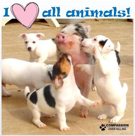 RT @TryVeg: Retweet if you 💖 all animals! 🐷🐶🐮🐓🐱🦃🐟🐭🐑🐐🐘🐰🐬#WorldEmojiDay https://t.co/fAXtQQmagi