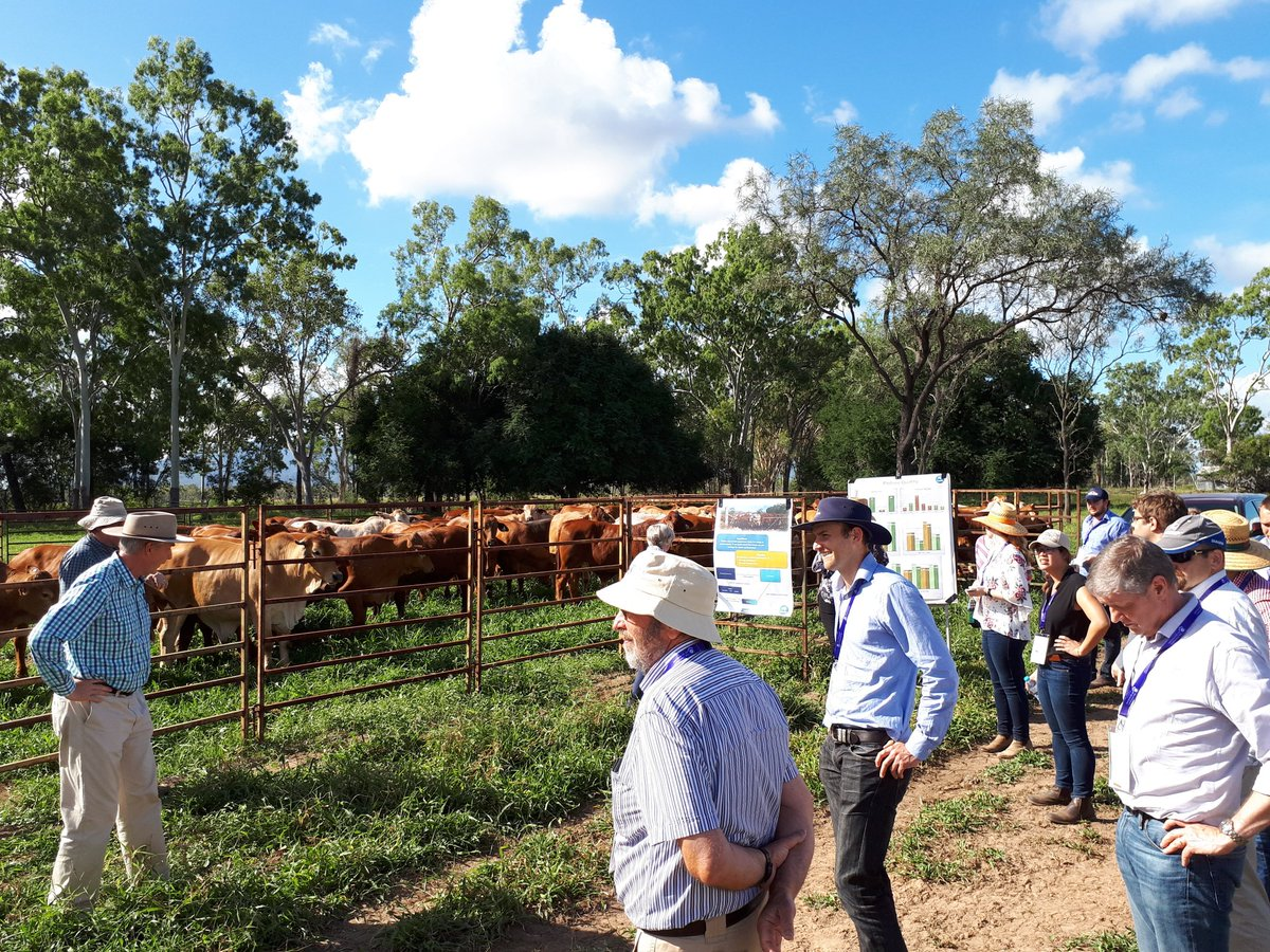 Field  trial at AAABG Genetics  conference Townsville. Genomic information usage  continues to expand. Regards JK