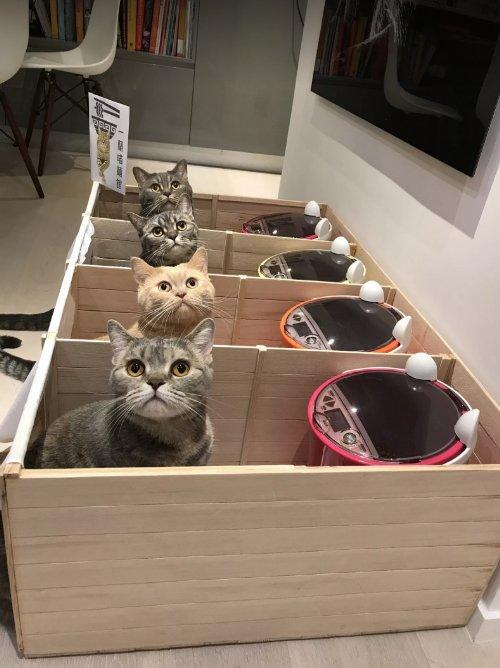 一蘭ニャーメンはじめました。ネコがエサを取り合わなくなるキュートな裏ワザ buzzfeed.com/…
