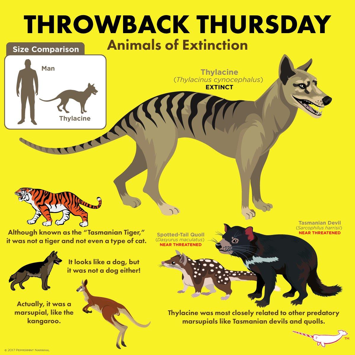 Mr Duber On Twitter Alright 7th Grade Remember The Thylacine