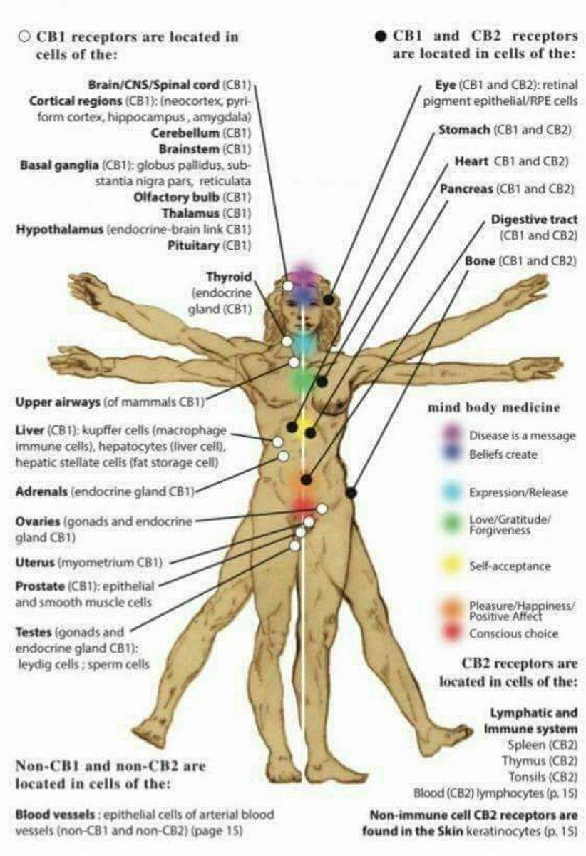 Cannabidiol and the Endocannabinoid System