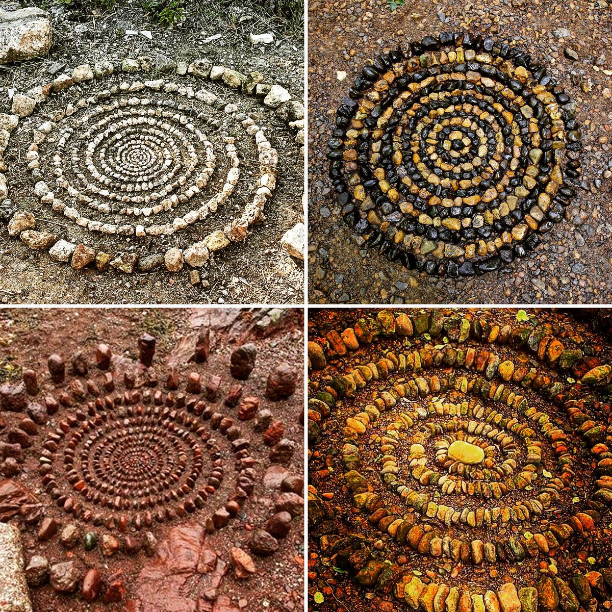 Spiral In Nature And Art