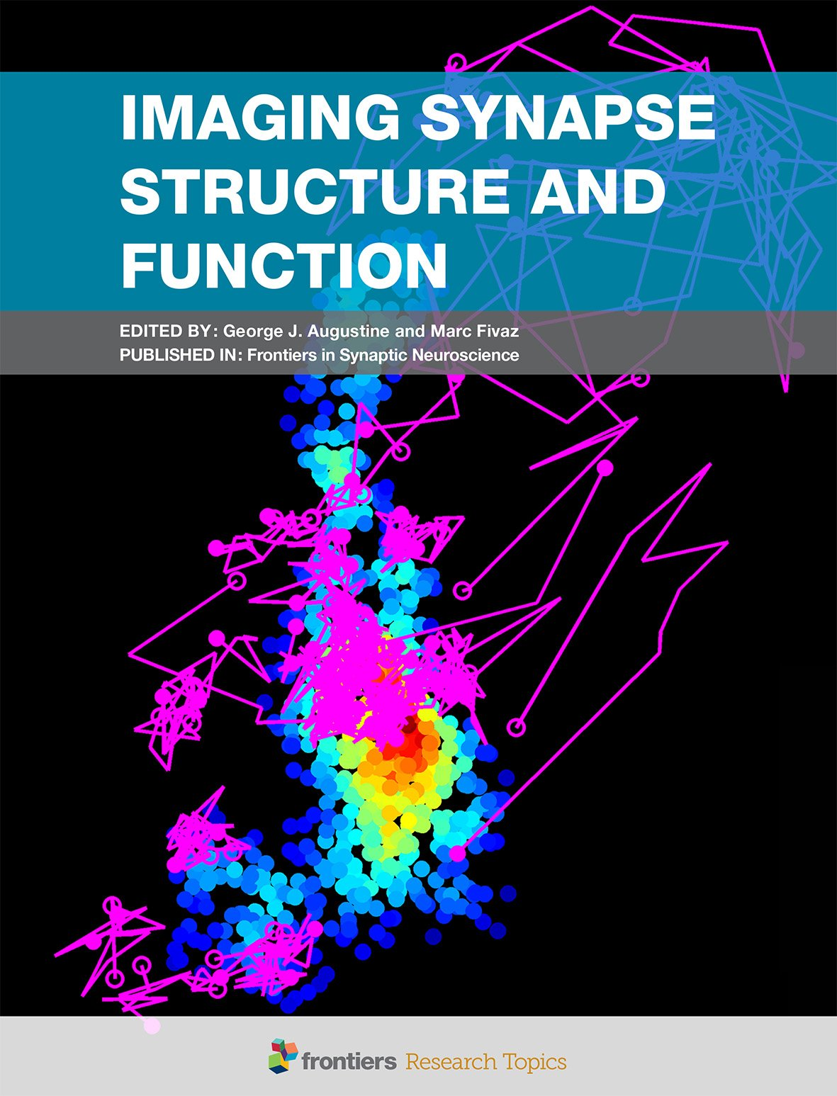 Marc fivaz on twitter imaging synapse structure function marc fivaz on twitter imaging synapse structure function ebook httpstrwvrntbyhk httpstoh2v4mnqwm fandeluxe Choice Image
