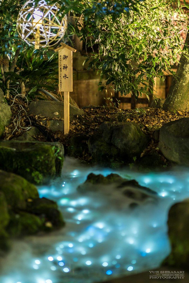 「氷川神社の天の川」  七夕の今日は、TLにはたくさんの天の川が流れていますが、こちらは地上の天の川…
