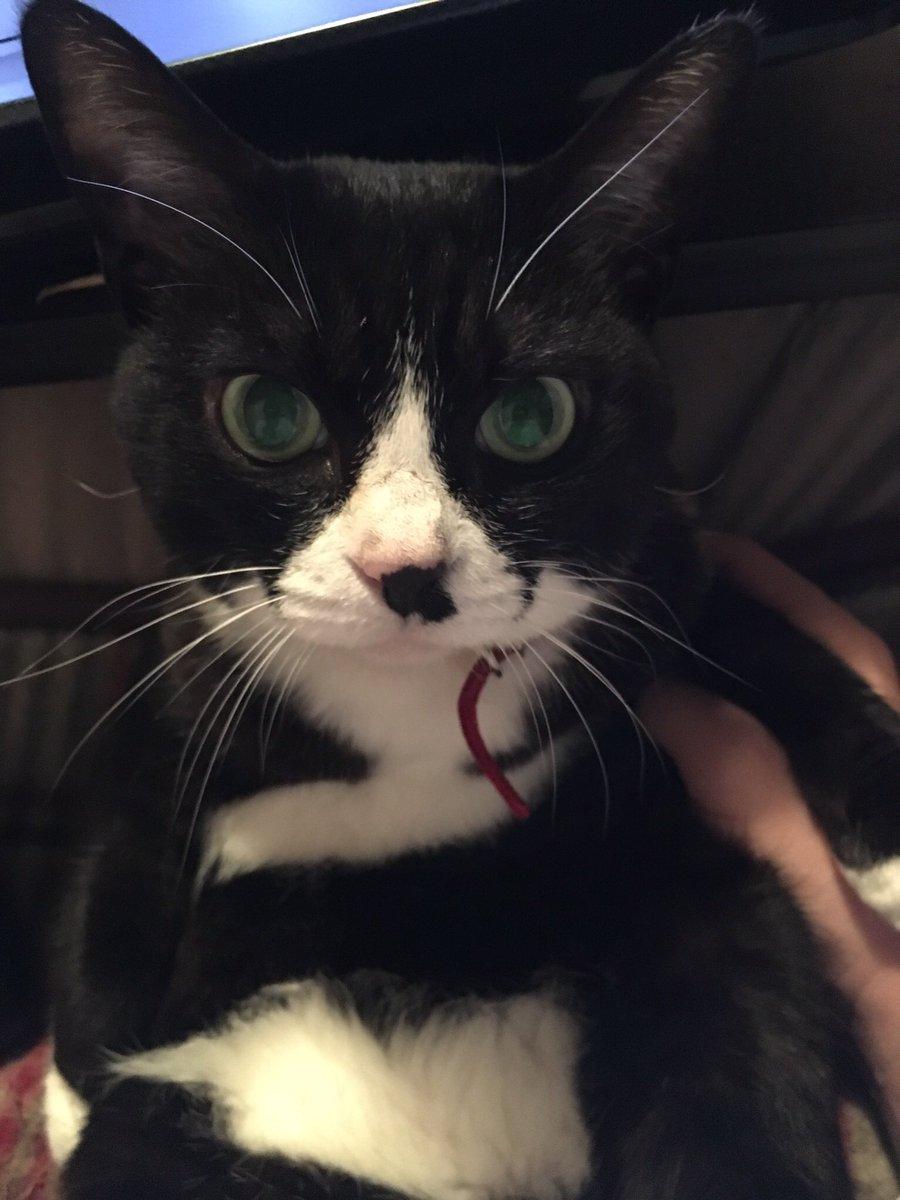 実家の猫が亡くなりました。 享年8歳です。  原因は熱中症です。 猫を飼ってる皆様へ クーラーはつけっぱなしでいてあげてください。 電気代なんかより、命の方が大事です。 たった一夏だけでいいんで、つけてあげてください。  今年は暑いです。お願いします。