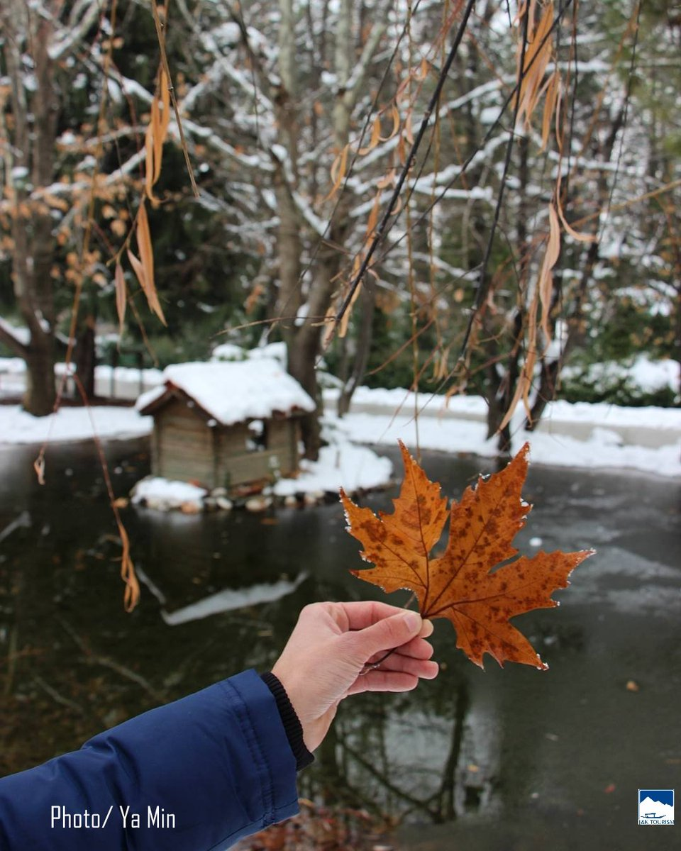 Jammu Kashmir Tourism On Twitter The Beautiful Chinar Leaf A