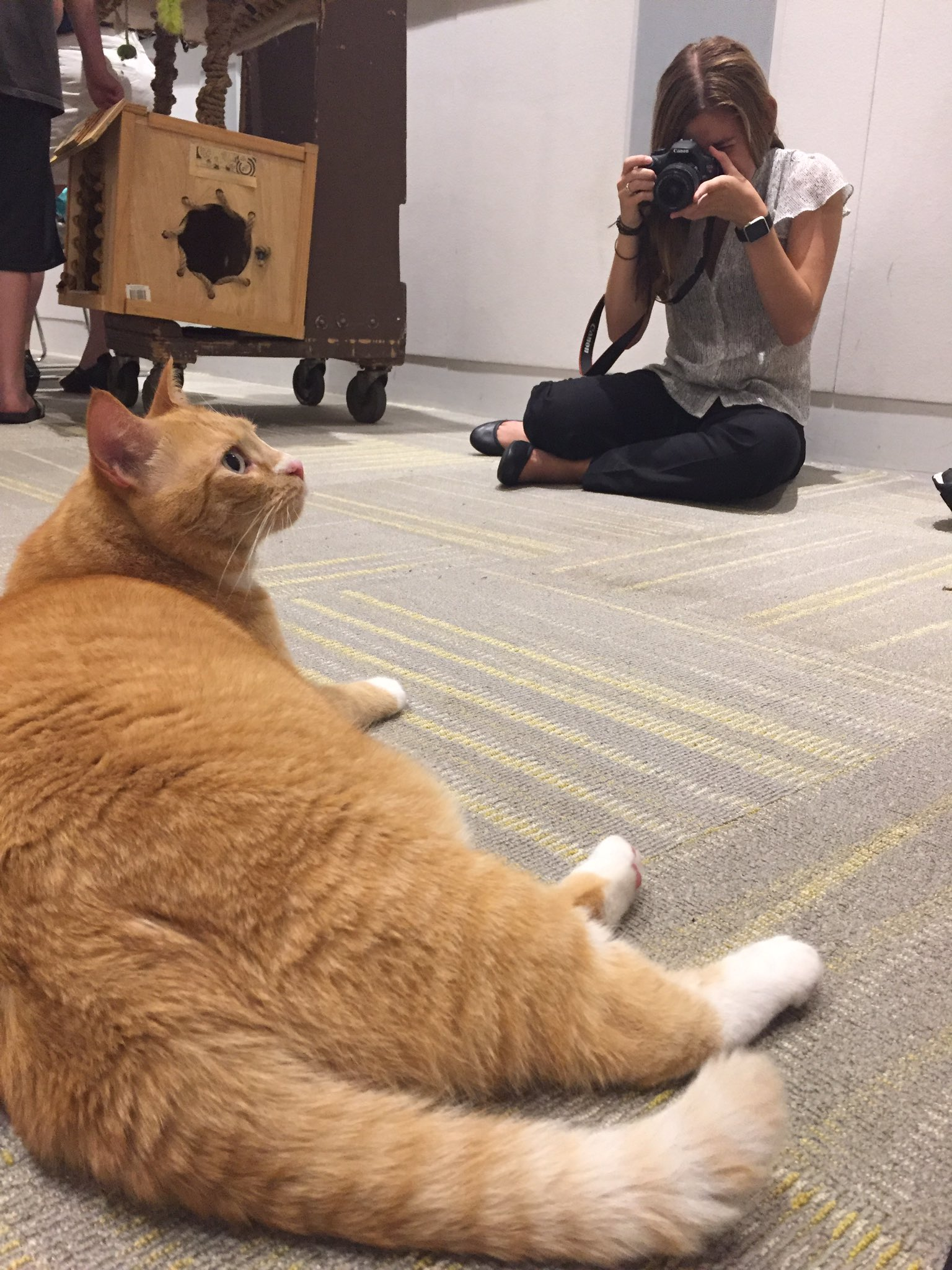 Thanks for coming to @DudetheCatDMNH's storytime, @BlueHenKris! #UDIntern #rockstarintern #Caturday #curatorialcats https://t.co/ZIhxWZdzHa