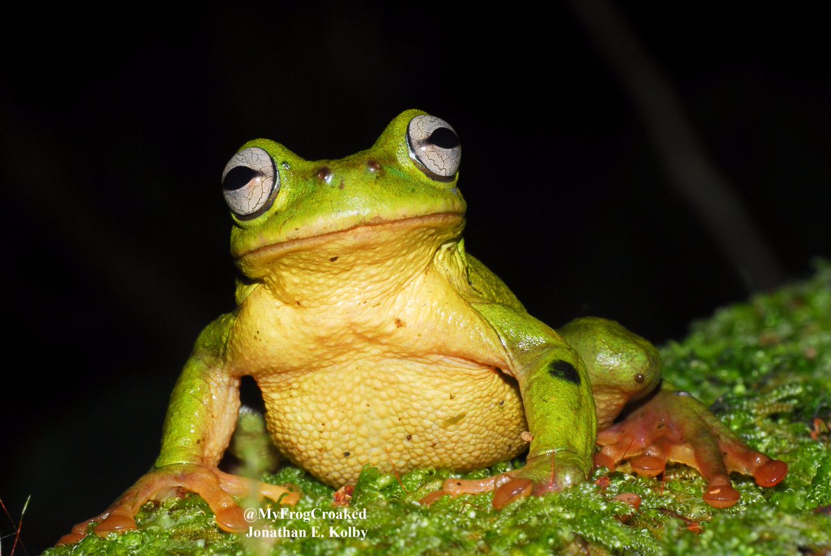 Can&#39;t wait to see this handsome #amphibian face again! #cute #HARCC #frog<br>http://pic.twitter.com/dcKUghA4lz