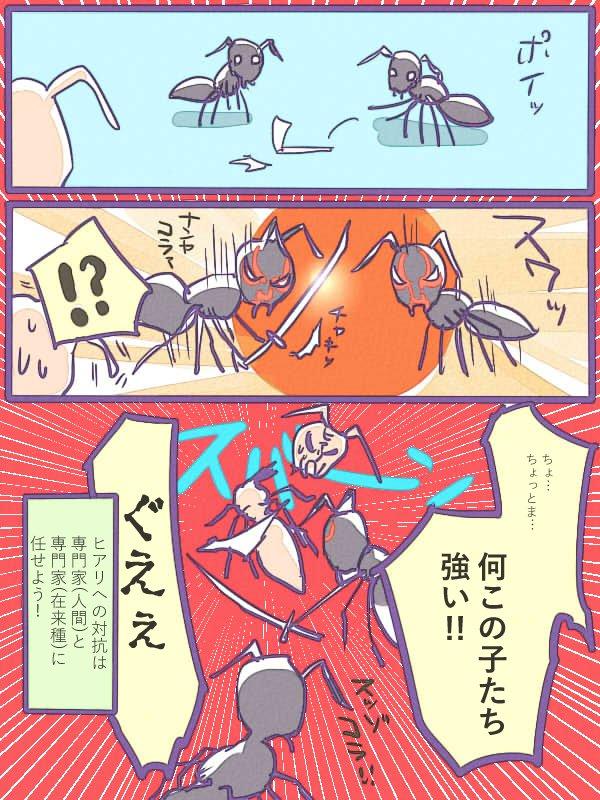 うわ日本のアリさん強い…!在来アリもヒアリ対策の1つ!