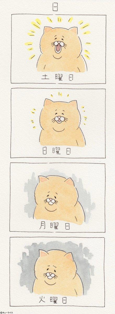 4コマ漫画ネコノヒー「日」/Sat.Sun.Mon.Tue. q-rais.com/entry/2017/07/…