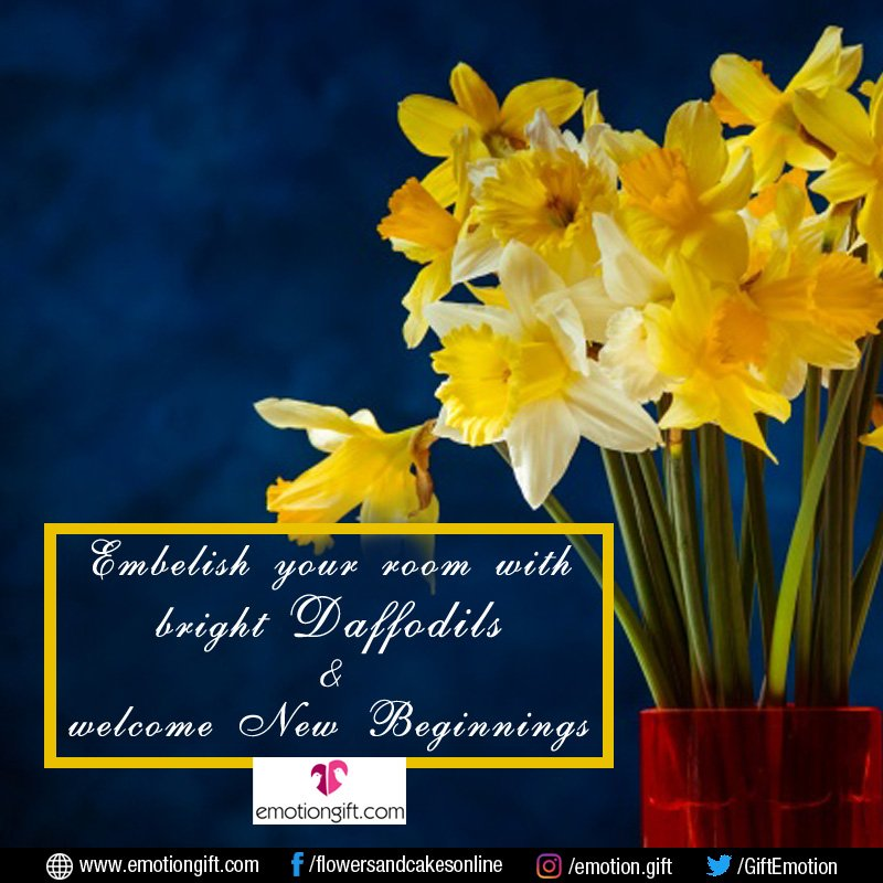 Emotion Gift On Twitter Do You Know Daffodil Flowers Symbolize