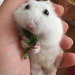 hamster_clubのサムネイル画像