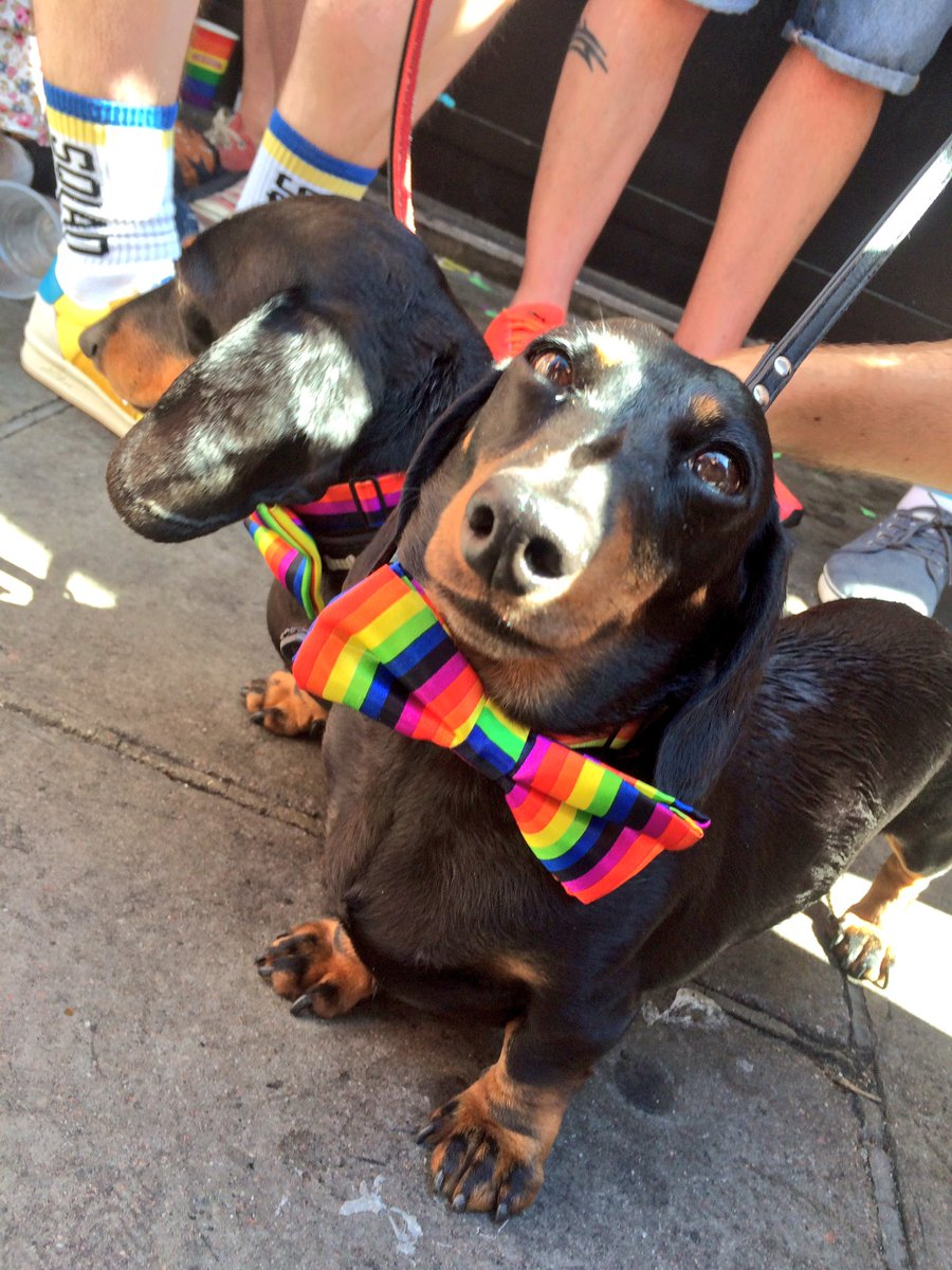 Yesterday at Pride I met these two doggos called Gilbert and George ❤️