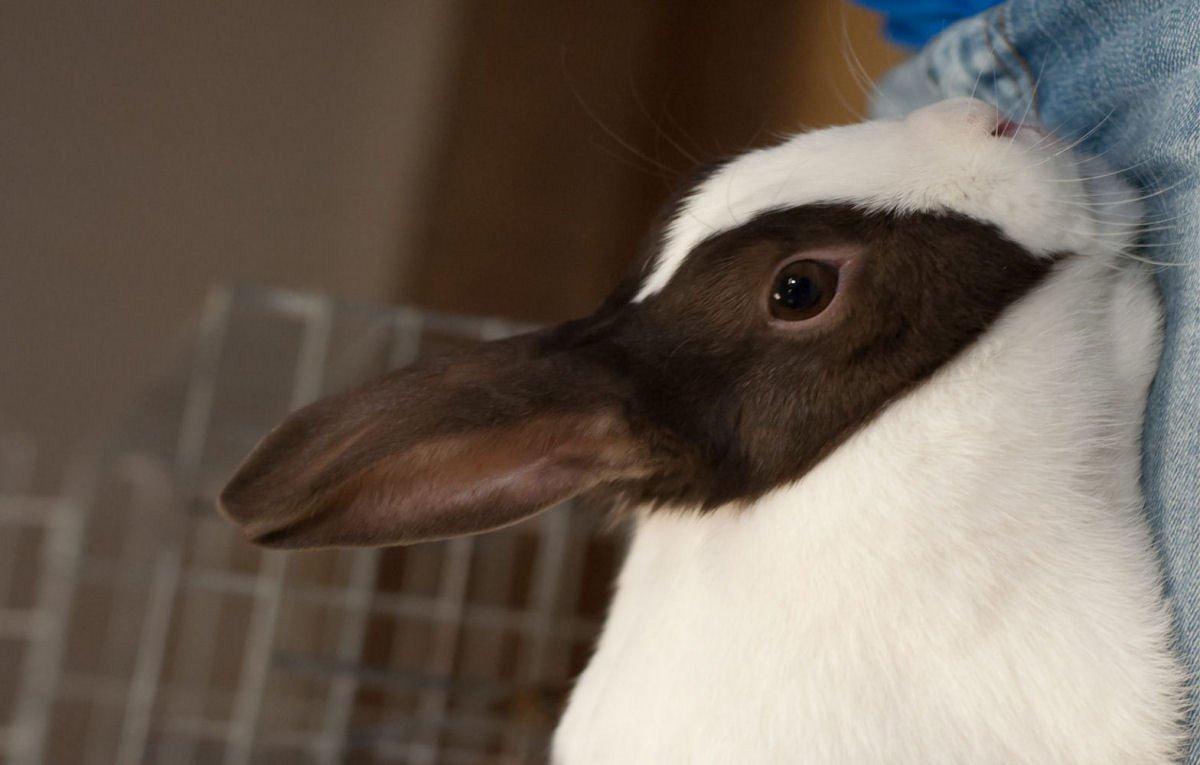 有名な「ウサギとアヒルのだまし絵」そっくりの生き物が現実にいた labaq.com/archives…