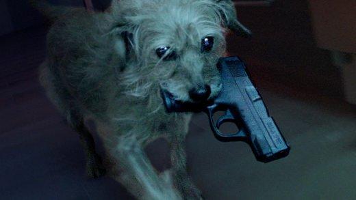 最愛の飼い主を殺されたイヌが復讐するムービー「ドッグ・ウィック」が話題 https://t.co/6ZMMFk0akZ #ジョン・ウィック #ドッグ・ウィック