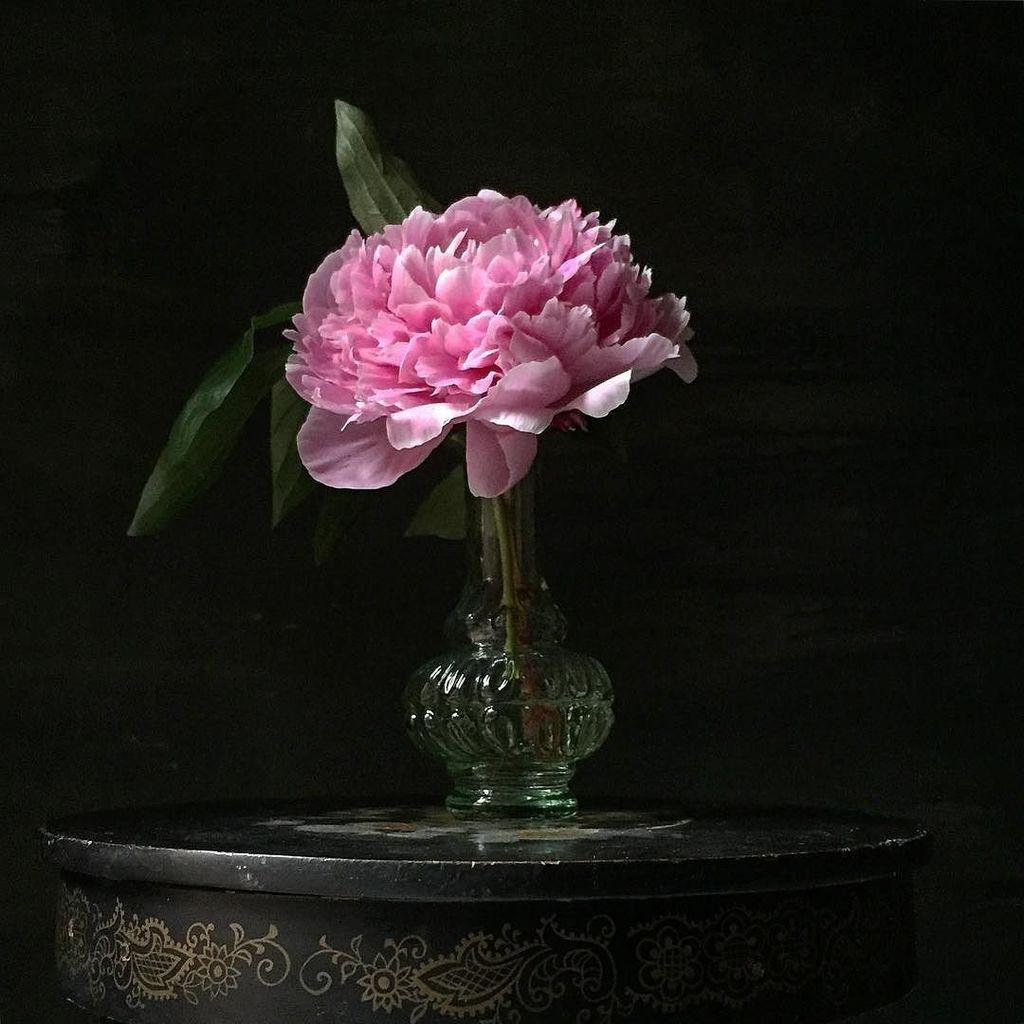 Monday still life with single peony. #patchnyc #stilllife #peony #vintage #pink #johnrossart #dsfloral  http:// ift.tt/2t3z456  &nbsp;  <br>http://pic.twitter.com/CkUQntDp00