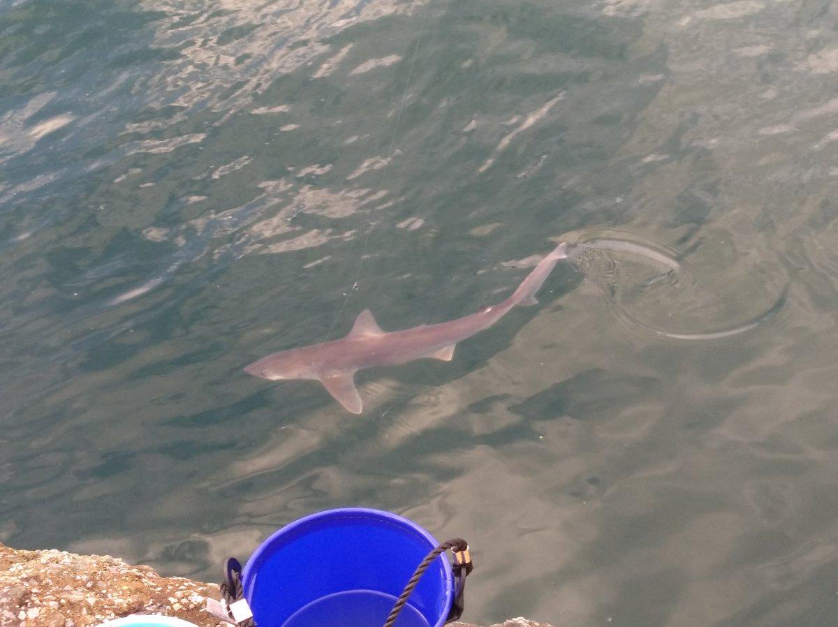 サメ釣れた