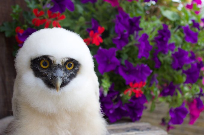 Birds of Prey displays and experiences are returning to The Hop Farm! Find out more info: https://t.co/CSeUy4Cj6C https://t.co/RCPaVZjkOn