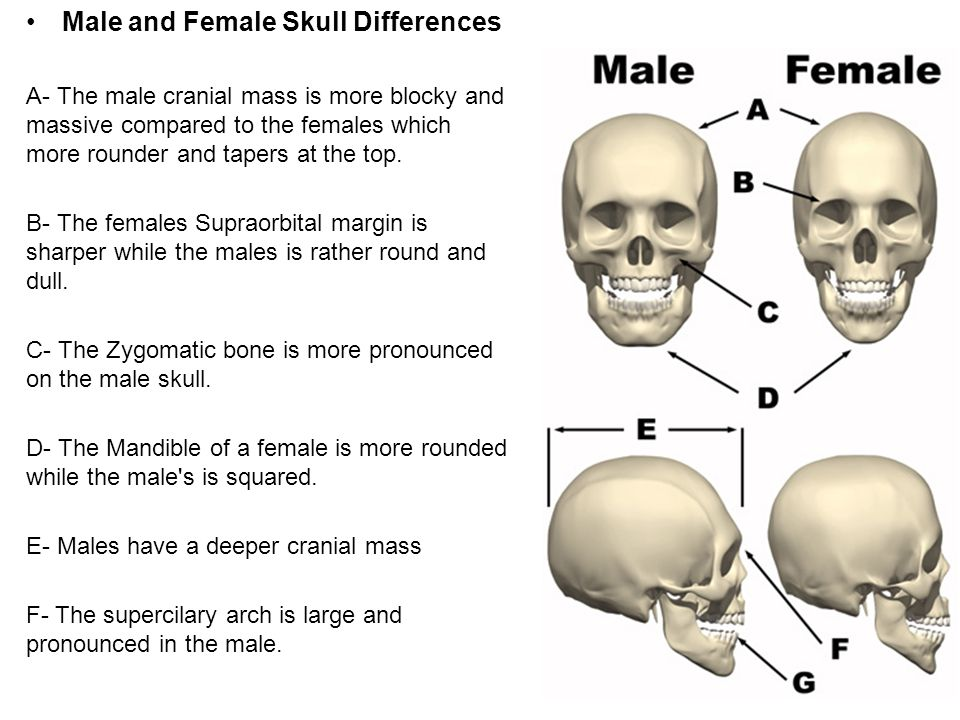 Difference between transgender male and female-1471