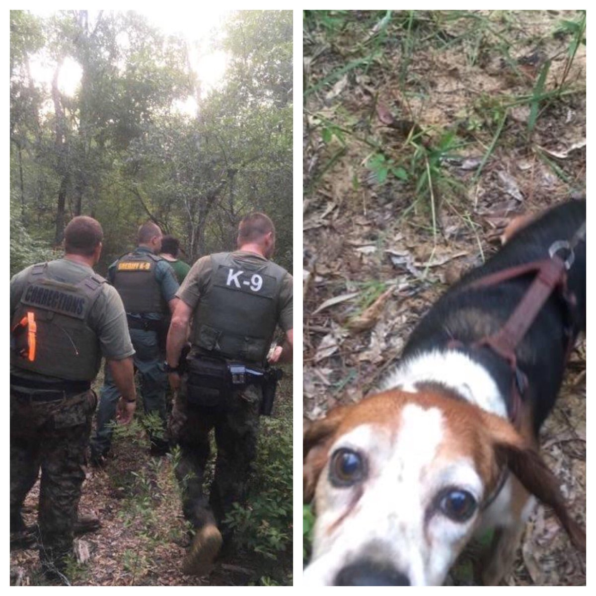 #K9 success!  #OCSO and Okaloosa Correctional Institution teams tracked thru woods & swamp to find disoriented missing Holt man. 👍⭐️🐾🐕 #lesm https://t.co/WE8ritwder