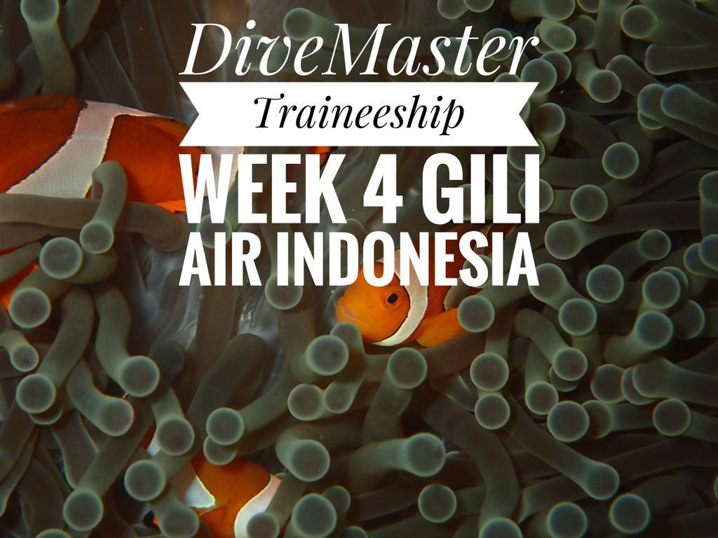 Week 4 of my #divemaster Traineeship video is live.   http:// wadeabout.com  &nbsp;   Or:  http:// bit.ly/2u1BVis  &nbsp;   #padi #scuba #diving #scubadiving <br>http://pic.twitter.com/wHOwXM0Y2T