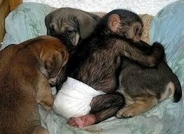 Monkeys hugging other creatures. https://t.co/bgNmuXA3cT
