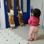 赤ちゃんと犬が仲良しすぎる!可愛い後ろ姿に胸キュン間違いなし!