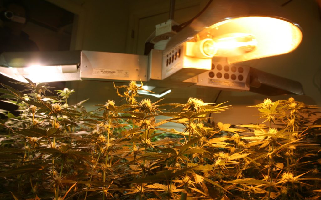 Grow Q&A: How Often Should I Replace My Grow-Light Bulbs? – High Times