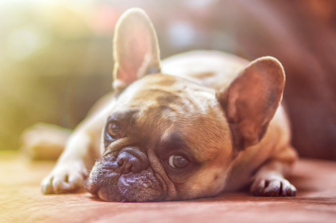 How to clear your stress when it affects your pets