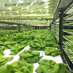 40-foot shipping container farm can grow 5 acres of food with 97% less water. https://t.co/sJ0HV64SLh