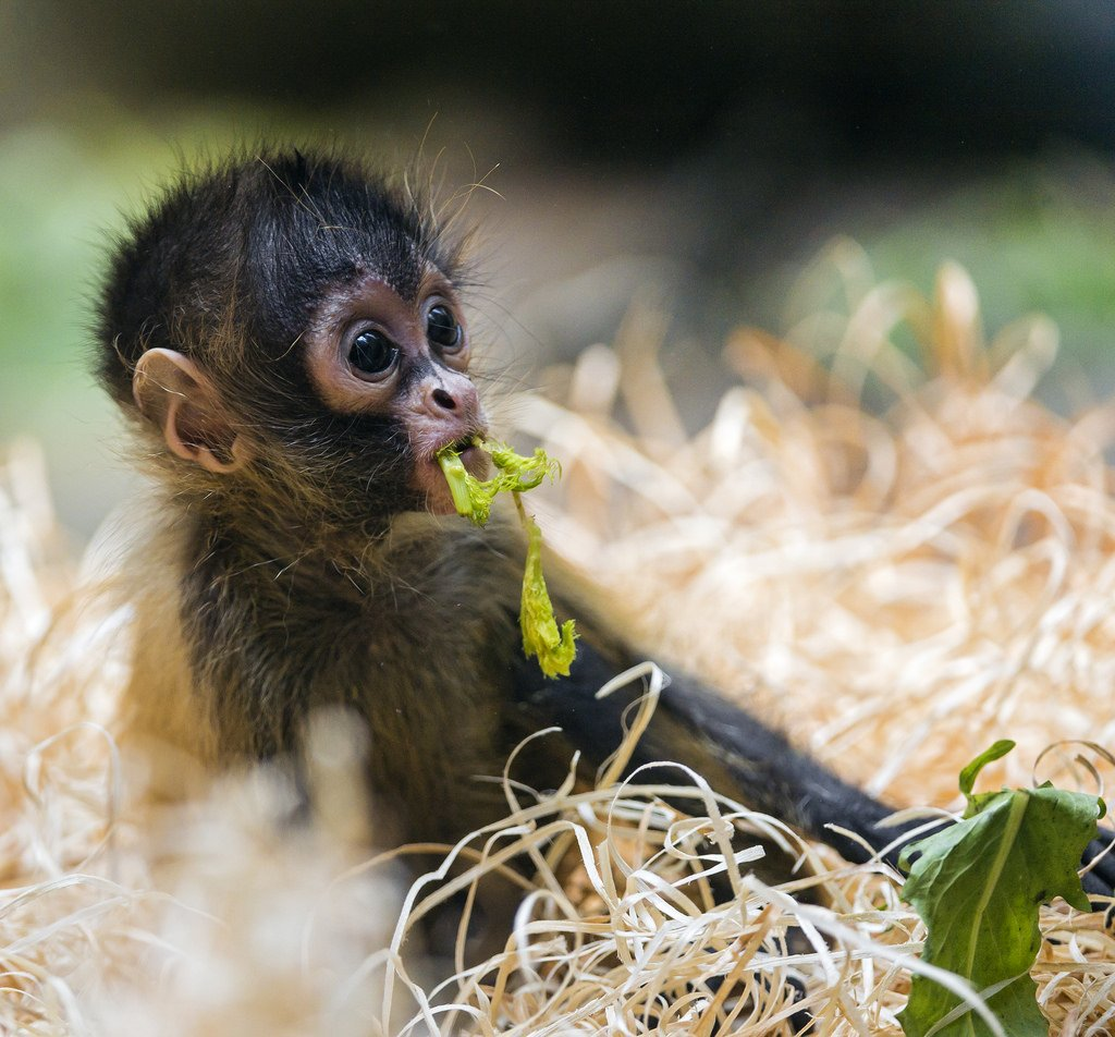 What better way to lift yourself up from the #MidWeek blues than the latest in our #cute #animal for #noreason #series #ntbn #pmht<br>http://pic.twitter.com/2gdKvvoERe