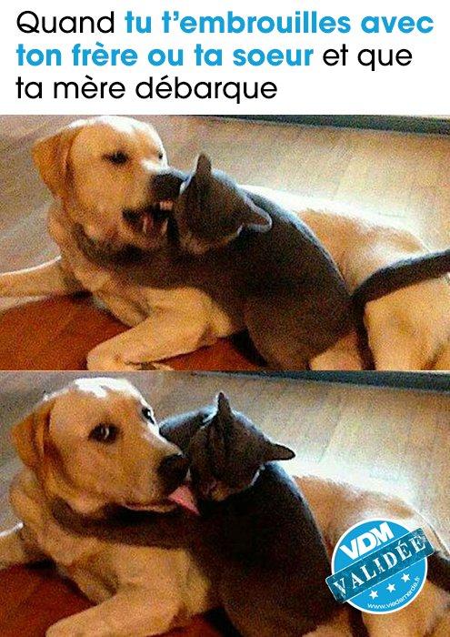Quand ta mère débarque en pleine embrouille ! Véridique 😏 #VDM #chien #chat #tamèredébarque #pokerface
