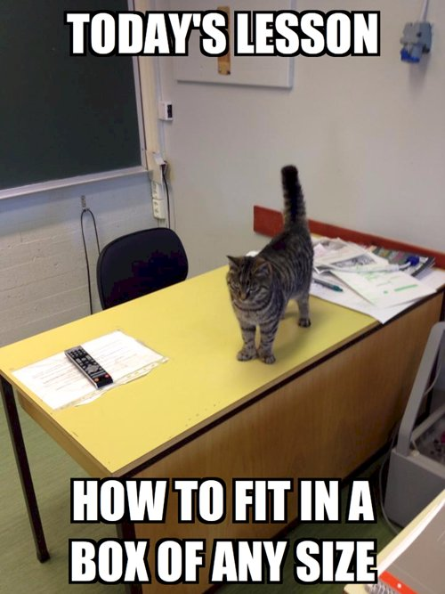 Cat Petting Self