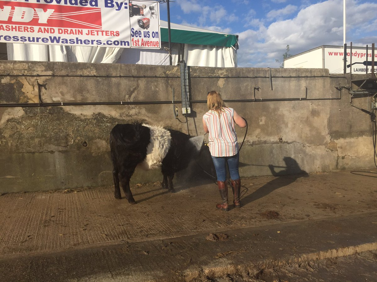 When it's just too HOT at the @greatyorkshow #BeltieShower Ah that's better @Belted_Galloway