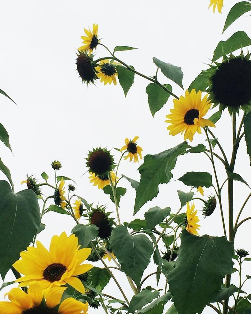 Taking advantage of the flattest, whitest sky, ever  #allthingsbotanical #bloomandgrow #dsfloral #seasonalflowe…  http:// ift.tt/2sRF01J  &nbsp;  <br>http://pic.twitter.com/kXH7rs0n7O