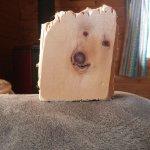 過去に何をしたんだろうw木に封印されてしまった犬!