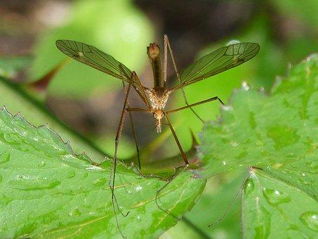 Zanzare e acqua tra le prime cause delle infezioni dell'estate | Salute News