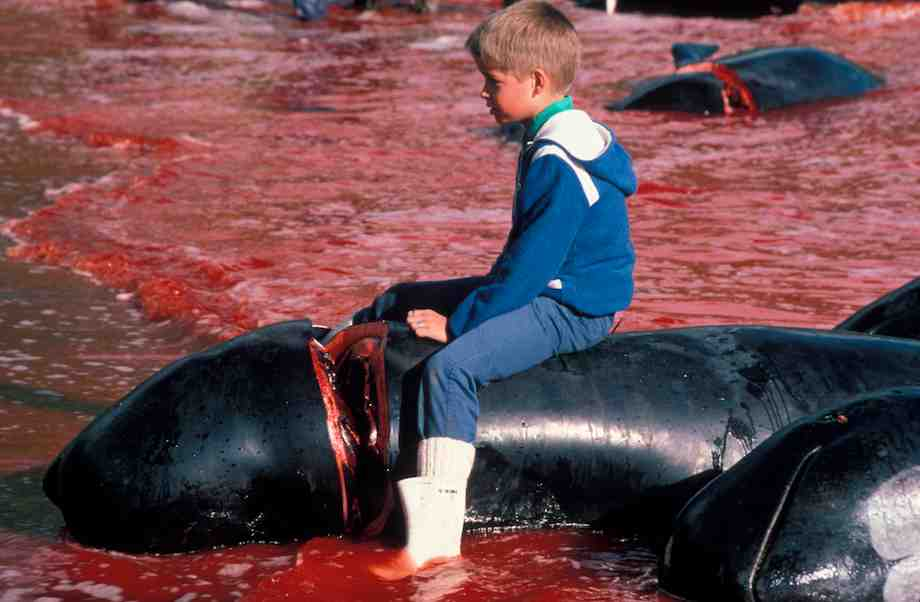 #FaroeIslands: Killing hundreds of #whales every year is somehow still normal behaviour https://t.co/u8dCE0eh71 https://t.co/Bklv0Qf0pd