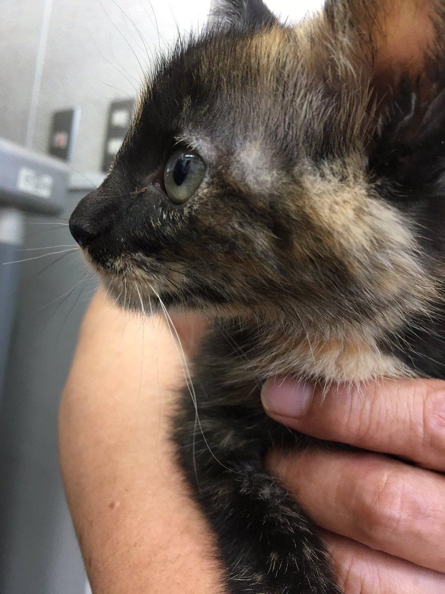 今日はボランティアで愛護センターに行ってきたよー。猫がたまってきたので写真を撮って譲渡サポートするのです。みんな人馴れしてるいい子だったからきっと全員もらわれると思う!(そしてフォロワーの中のサビクラスタに捧ぐ写真)