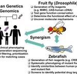 Check out our new model organisms research page to learn how the UDN uses fly & fish models to study human disease https://t.co/ndUbMxcFGN