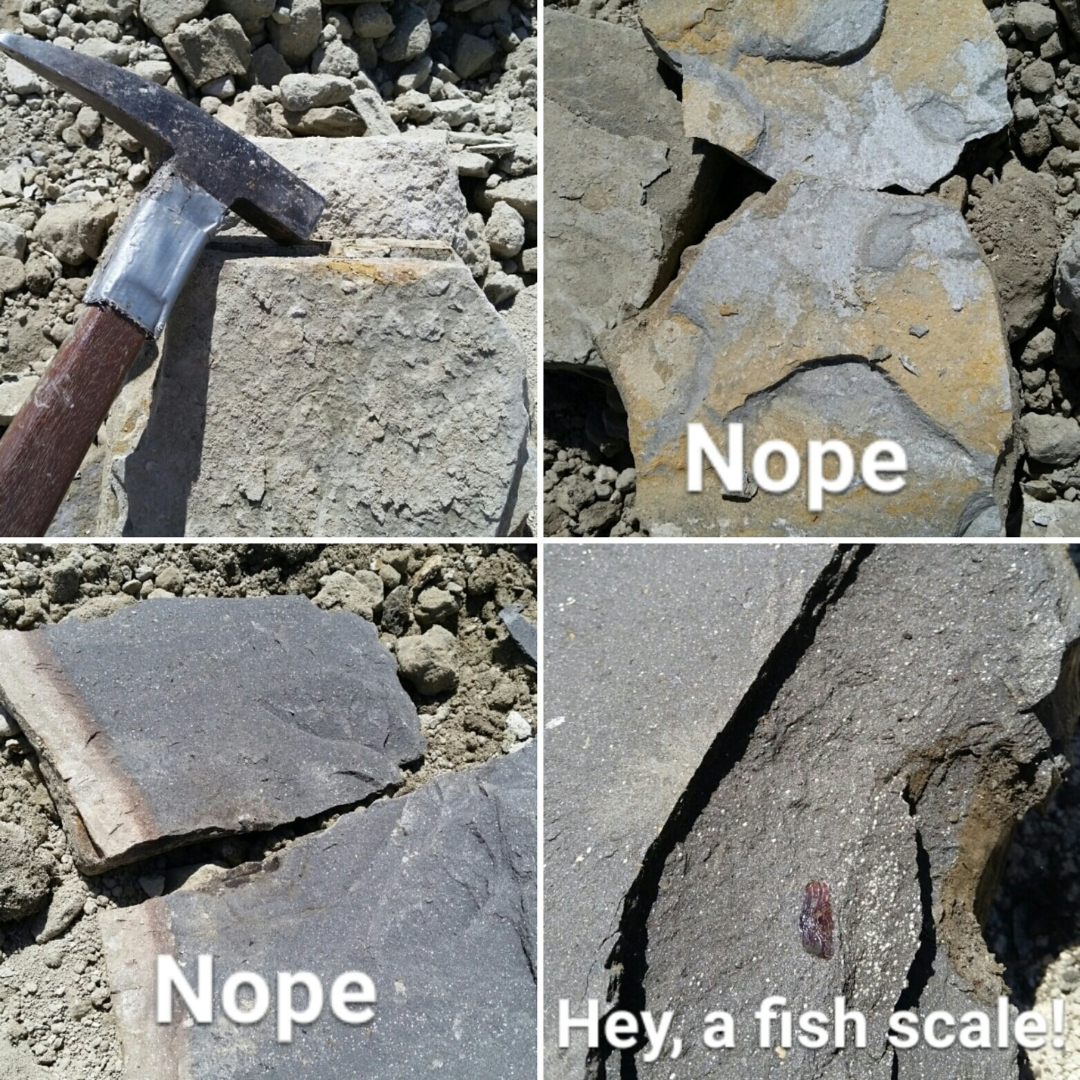 @science_a_thon Let's break open some shales and sandstone to see if there are any Paleontological finds... #scienceathon #dayofscience https://t.co/wmO41E00jh